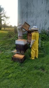 The Backyard Beekeeper Services U2013 The Wholesome Hive