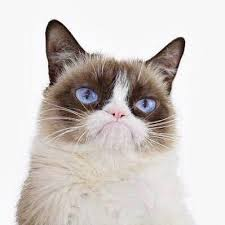 Grumpy Cat Photo 1 Best - grumpy cat realgrumpycat twitter