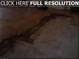 Laminate Flooring And Dog Urine Dog Urine Hardwood Floors Titandish Decoration