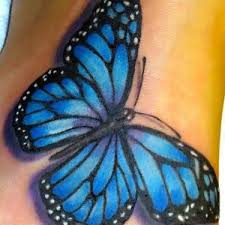 best 25 blue butterfly ideas on blue butterfly
