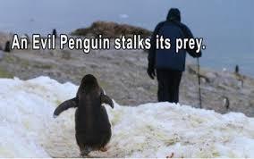 Penguin Memes - only penguin memes album on imgur