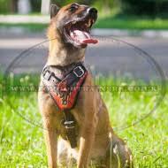 belgian shepherd uk belgian shepherd malinois dog harness flame