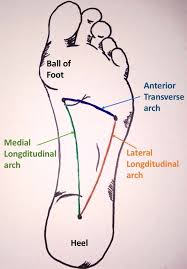 Anatomy Of A Foot The Arches Of The Foot Longitudinal Transverse Teachmeanatomy
