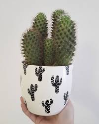 vases u2013 home decor diy cactus patterned flower pots with