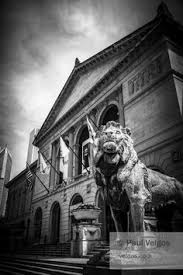 Lion Decor Home Pin By Tora On Lion Photography Pinterest Lion Photography And