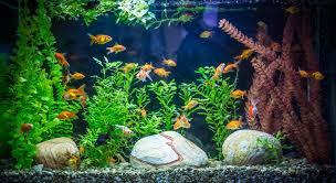 The Best Aquarium Decorations to Buy Pet Shop Boston