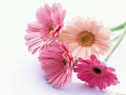Nice Flowers Flowers For Flower Lovers Beautiful Flowers Wallpapers