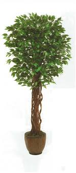 artificial outdoor ficus trees