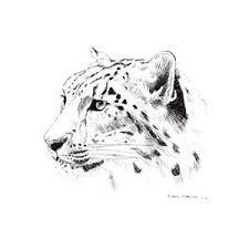 sketch note cards islt 10 00 snow leopard trust shop