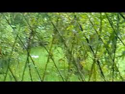 willow gazebo willow gazebo outside youtube