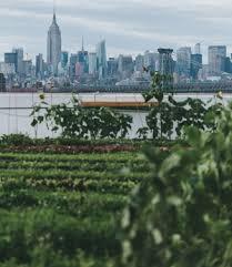 Urban Veggie Garden - planning an urban vegetable garden u2014 brooklyn grange