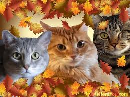 wishing you a happy thanskgiving cats herd you