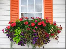 beautiful window box design decorating ideas my home design journey