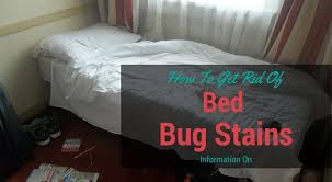 How To Get Rid Of Bed Bugs In Mattress Information On How To Get Rid Of Bed Bug Stains Cleaninsider