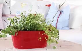 Small Herb Garden Ideas Three Easy Small Herb Garden Ideas Mnn Nature Network