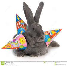 rabbit birthday birthday rabbit stock photo image of rodent birthday