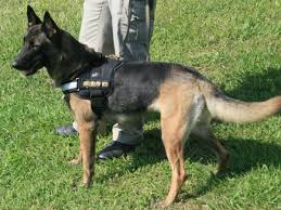 belgian shepherd quotes details released in car death of madison county k 9 fort