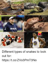 Look Out Meme - memes 35 arri different types of snakes to look out for