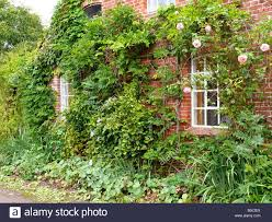 brick house facade detail climbing plants house residence