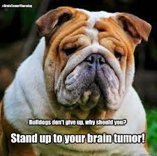 Tumor Meme - brain tumor memes quickmeme
