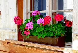 Wooden Window Flower Boxes - flower box window flower house jewelry wood window gap deco