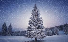beautiful christmas tree in blue u2013 happy holidays