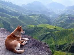 beautiful landscapes wallpaper wide picture desktop