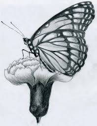 pencil drawings of flowers and butterflies kids and
