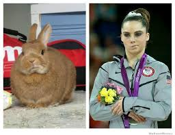 Not Impressed Meme - mckayla is not impressed bunny weknowmemes