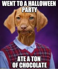Halloween Party Meme - bad luck raydog viral memes imgflip