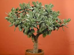 past plant of the month house plant succulents