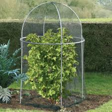 Vegetable Garden Netting Frame by Fruit Cages And Vegetable Cages From The Gardening Website
