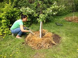 how to prepare fruit trees for winter orchard people