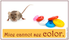 captivating facts about mice that will leave you amazed