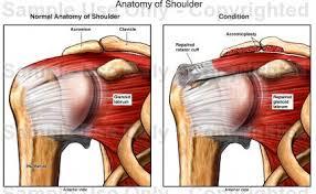 Human Shoulder Diagram Anatomy Of Shoulder Medical Illustration Human Anatomy Drawing