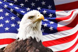 The America Flag Bald Eagle And A Flag Free Stock Photo Public Domain Pictures