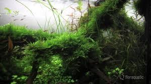 Aquascape Inspiration Aquascape Aquatiic Plants Live Planted Aquarium Inspiration