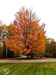 fall foliage road trip hampshire