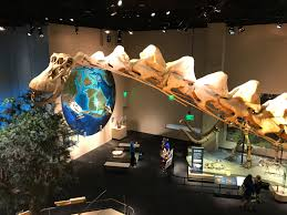 the perot museum of nature and science learning engaged