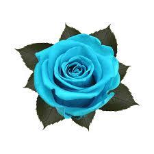 teal roses kiara flowers