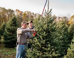 buy christmas tree why you should buy a real michigan christmas tree farm flavor