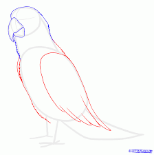 how to draw parrots draw macaws step by step birds animals