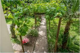 backyards trendy grape vine trellis 13 with 29 building a