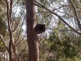 bushwalking australian style the 道 of our l u0027art de vivre
