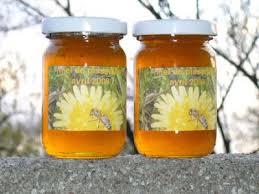 cuisine au miel cuisine sauvage miel de pissenlits