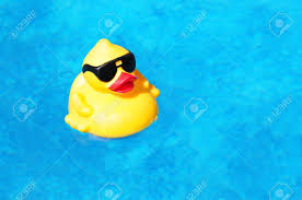 Inside Swimming Pool Rubber Yellow Duck Floating Inside A Swimming Pool Stock Photo