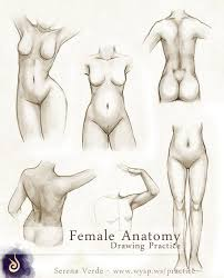 female anatomy drawing practice by serenaverdeart on deviantart