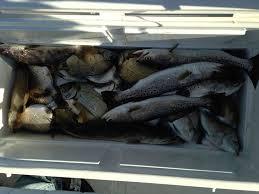 target black friday jacksonville fl 34 best jacksonville fishing images on pinterest the o u0027jays