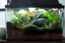 new nep grow chamber new terrarium design page 2