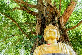 buddha image sitting bodhi tree stock photo picture and